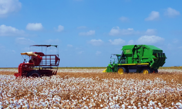 Cotton field being harvested