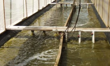Mariculture breeding facility
