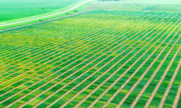 Aerial of crops